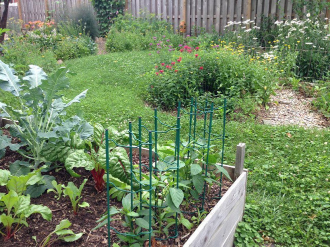 Khu vườn đầy rau xanh và trái ngọt của người phụ nữ bỏ việc giáo viên về làm vườn - Ảnh 3.