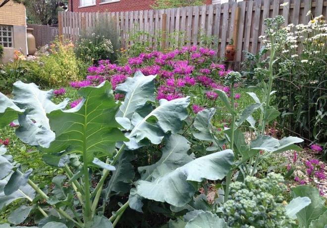 Khu vườn đầy rau xanh và trái ngọt của người phụ nữ bỏ việc giáo viên về làm vườn - Ảnh 6.