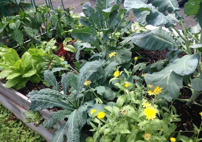 Khu vườn đầy rau xanh và trái ngọt của người phụ nữ bỏ việc giáo viên về làm vườn - Ảnh 8.
