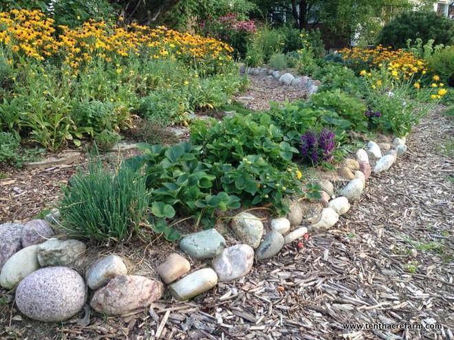 Khu vườn đầy rau xanh và trái ngọt của người phụ nữ bỏ việc giáo viên về làm vườn - Ảnh 10.