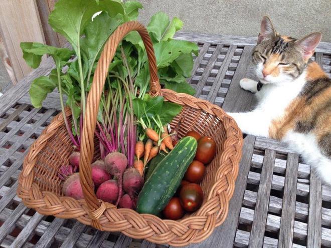 Khu vườn đầy rau xanh và trái ngọt của người phụ nữ bỏ việc giáo viên về làm vườn - Ảnh 15.