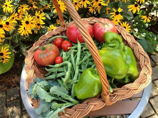 Khu vườn đầy rau xanh và trái ngọt của người phụ nữ bỏ việc giáo viên về làm vườn - Ảnh 16.