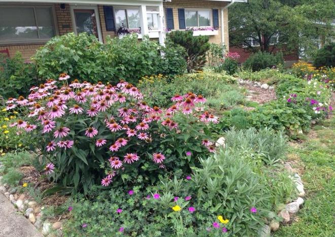 Khu vườn đầy rau xanh và trái ngọt của người phụ nữ bỏ việc giáo viên về làm vườn - Ảnh 21.