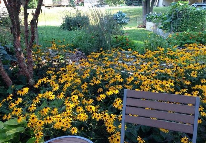 Khu vườn đầy rau xanh và trái ngọt của người phụ nữ bỏ việc giáo viên về làm vườn - Ảnh 23.