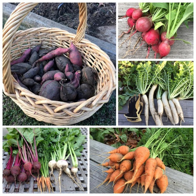 Khu vườn đầy rau xanh và trái ngọt của người phụ nữ bỏ việc giáo viên về làm vườn - Ảnh 24.