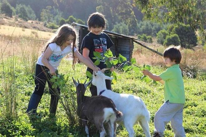 Cuộc sống yên bình của một gia đình nhỏ bên khu vườn cây sai trĩu quả như trong thế giới cổ tích - Ảnh 4.