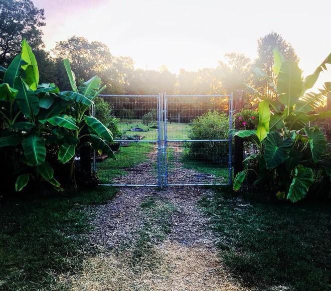 Khu vườn rộng thênh thang đầy ắp rau củ quả sạch của hai chị em gái 9x - Ảnh 2.