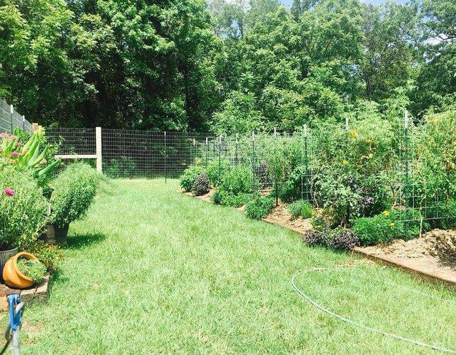 Khu vườn rộng thênh thang đầy ắp rau củ quả sạch của hai chị em gái 9x - Ảnh 4.