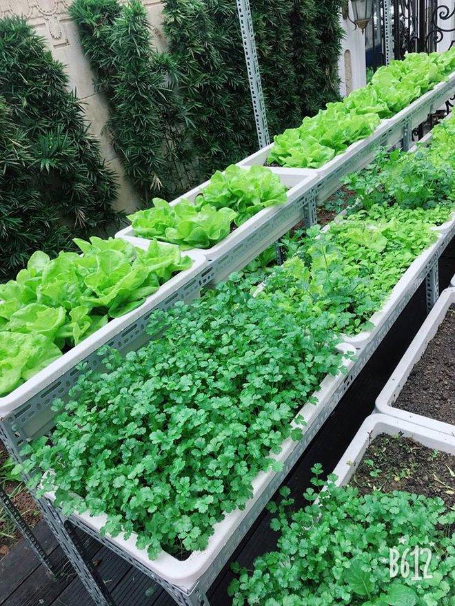 Vườn rau sạch được trồng trên sân thượng biệt thự tiền tỷ của Nữ hoàng sắc đẹp Toàn cầu Ngọc Duyên - Ảnh 5.