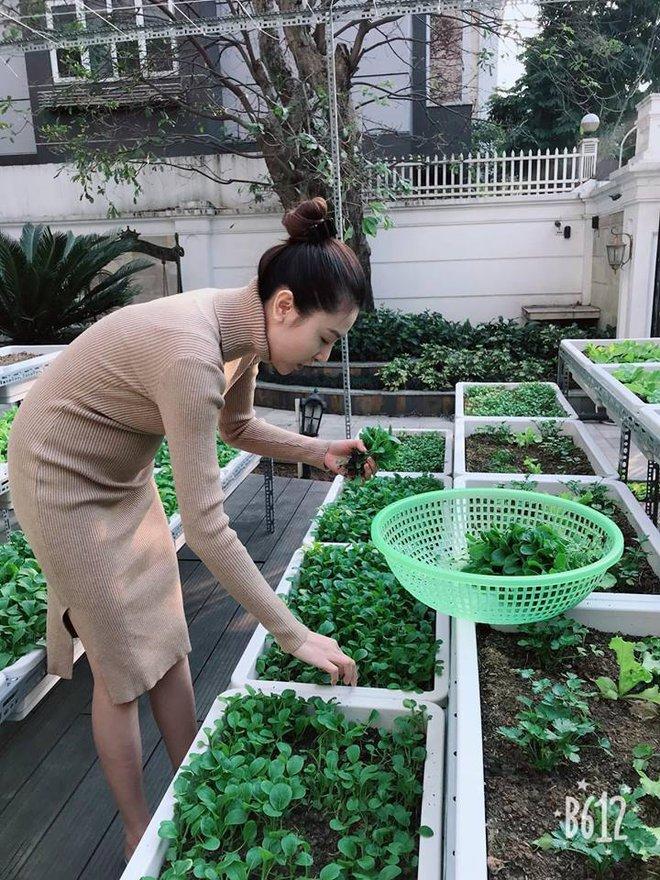 Vườn rau sạch được trồng trên sân thượng biệt thự tiền tỷ của Nữ hoàng sắc đẹp Toàn cầu Ngọc Duyên - Ảnh 7.