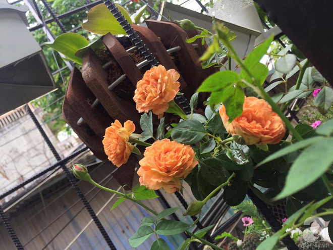 Khoảng sân rộn ràng hoa lá cùng tiếng chim ca vô cùng yên bình của bà mẹ 3 con ở Nghi Tàm, Hà Nội - Ảnh 10.