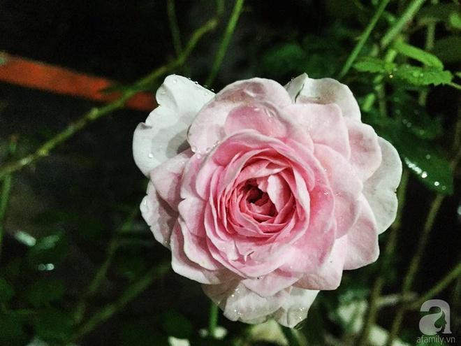 Khoảng sân rộn ràng hoa lá cùng tiếng chim ca vô cùng yên bình của bà mẹ 3 con ở Nghi Tàm, Hà Nội - Ảnh 11.