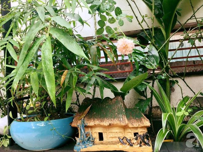 Khoảng sân rộn ràng hoa lá cùng tiếng chim ca vô cùng yên bình của bà mẹ 3 con ở Nghi Tàm, Hà Nội - Ảnh 12.