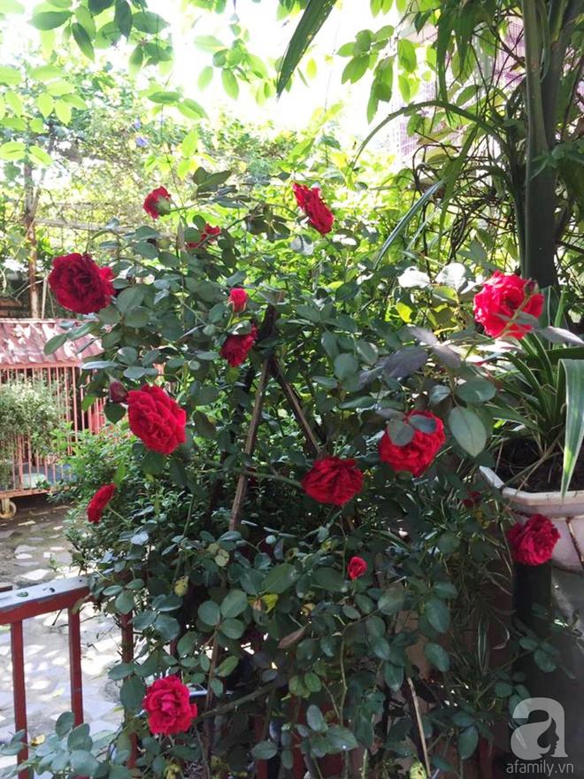 Khoảng sân rộn ràng hoa lá cùng tiếng chim ca vô cùng yên bình của bà mẹ 3 con ở Nghi Tàm, Hà Nội - Ảnh 13.