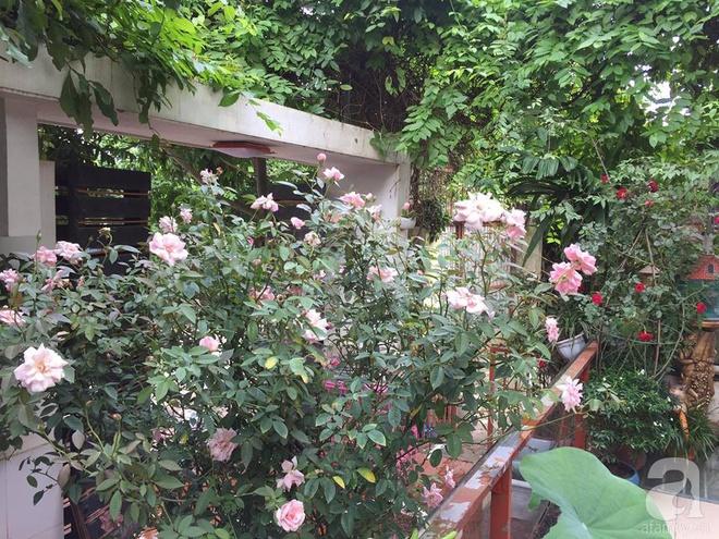 Khoảng sân rộn ràng hoa lá cùng tiếng chim ca vô cùng yên bình của bà mẹ 3 con ở Nghi Tàm, Hà Nội - Ảnh 14.