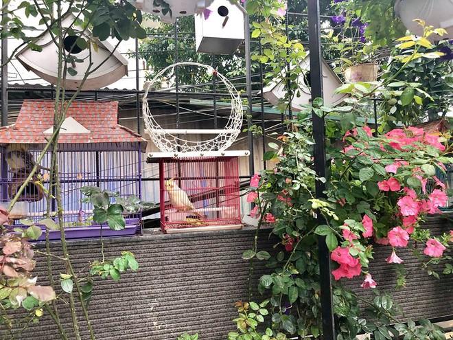 Khoảng sân rộn ràng hoa lá cùng tiếng chim ca vô cùng yên bình của bà mẹ 3 con ở Nghi Tàm, Hà Nội - Ảnh 17.