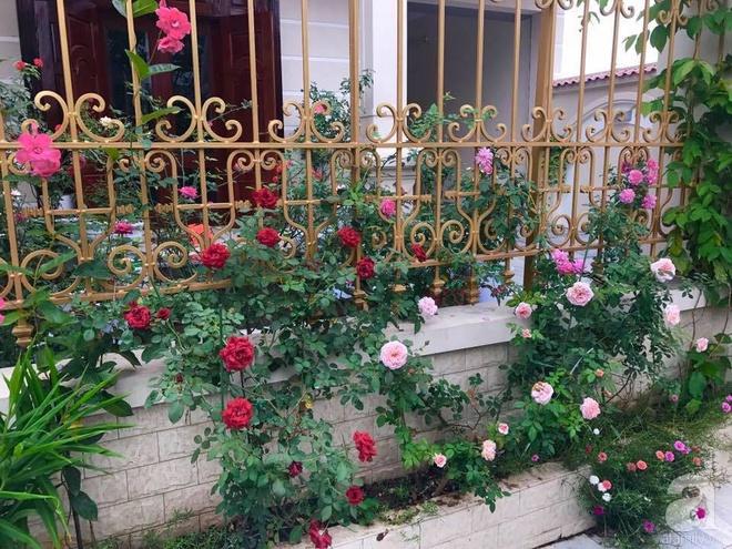 Khoảng sân nhỏ nhưng có những chậu hồng sai hoa, đẹp ngất ngây của mẹ hai con ở Hòa Bình - Ảnh 3.