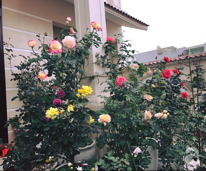 Khoảng sân nhỏ nhưng có những chậu hồng sai hoa, đẹp ngất ngây của mẹ hai con ở Hòa Bình - Ảnh 6.