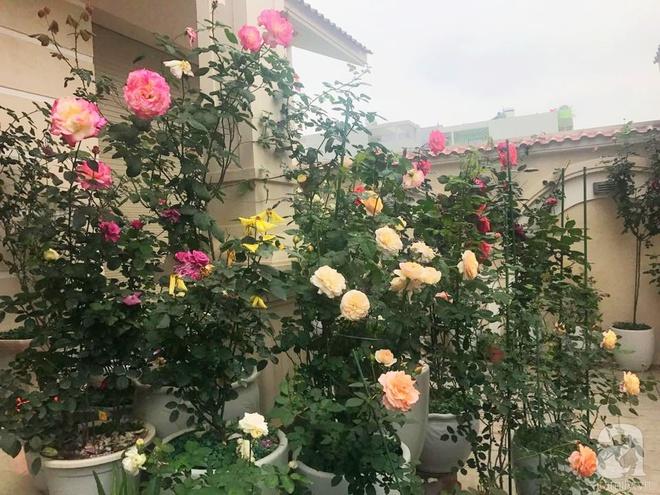 Khoảng sân nhỏ nhưng có những chậu hồng sai hoa, đẹp ngất ngây của mẹ hai con ở Hòa Bình - Ảnh 7.