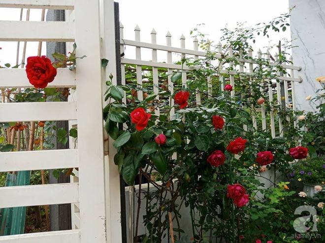 Ngôi nhà hoa hồng nhỏ nhắn và vô cùng dễ thương giữa thành phố Hạ Long của mẹ trẻ xinh đẹp - Ảnh 1.