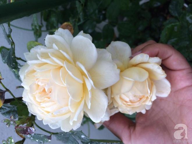 Ngôi nhà hoa hồng nhỏ nhắn và vô cùng dễ thương giữa thành phố Hạ Long của mẹ trẻ xinh đẹp - Ảnh 13.