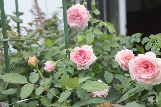 Ngôi nhà hoa hồng nhỏ nhắn và vô cùng dễ thương giữa thành phố Hạ Long của mẹ trẻ xinh đẹp - Ảnh 14.