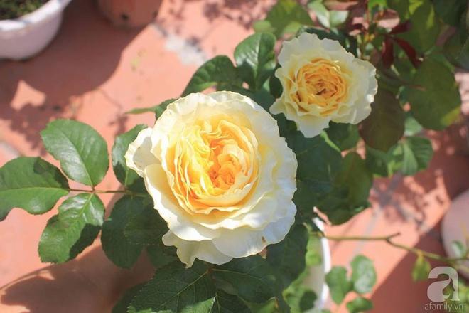 Ngôi nhà hoa hồng nhỏ nhắn và vô cùng dễ thương giữa thành phố Hạ Long của mẹ trẻ xinh đẹp - Ảnh 20.
