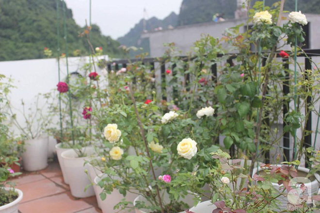Ngôi nhà hoa hồng nhỏ nhắn và vô cùng dễ thương giữa thành phố Hạ Long của mẹ trẻ xinh đẹp - Ảnh 21.