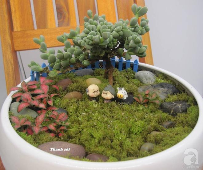 Vườn sen đá đẹp ngất ngây của chàng trai Hà Nội dành cả tuổi thanh xuân cho niềm đam mê của mình - Ảnh 11.