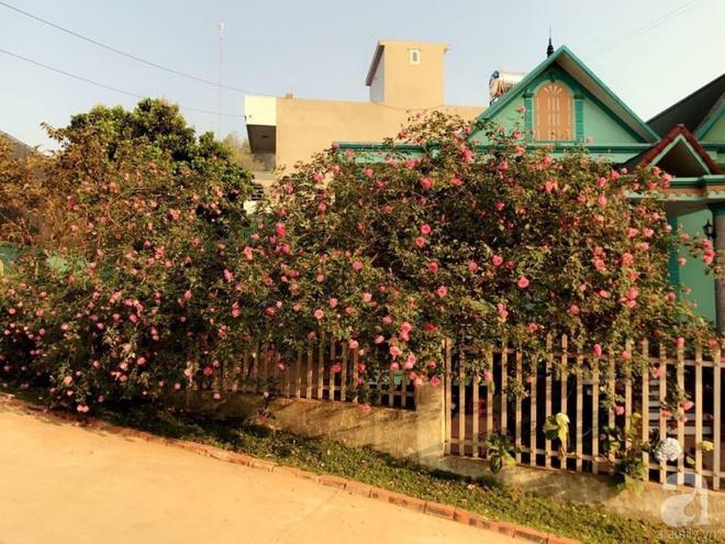 Ngôi nhà yên bình rợp bóng hồng cổ Sapa trên phố núi Tây Bắc của mẹ hai con xinh đẹp - Ảnh 3.