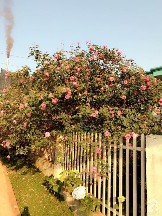 Ngôi nhà yên bình rợp bóng hồng cổ Sapa trên phố núi Tây Bắc của mẹ hai con xinh đẹp - Ảnh 4.