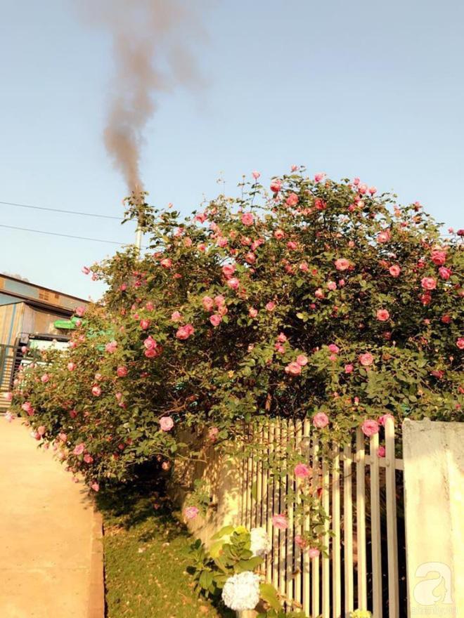 Ngôi nhà yên bình rợp bóng hồng cổ Sapa trên phố núi Tây Bắc của mẹ hai con xinh đẹp - Ảnh 5.