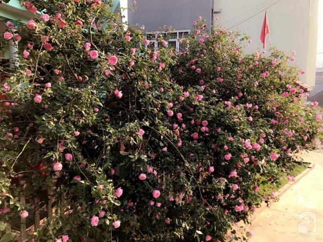 Ngôi nhà yên bình rợp bóng hồng cổ Sapa trên phố núi Tây Bắc của mẹ hai con xinh đẹp - Ảnh 6.