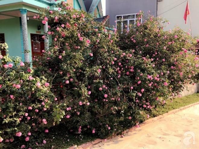 Ngôi nhà yên bình rợp bóng hồng cổ Sapa trên phố núi Tây Bắc của mẹ hai con xinh đẹp - Ảnh 7.