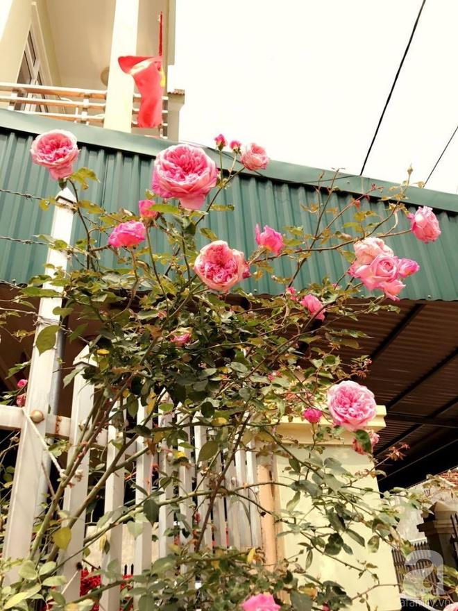 Ngôi nhà yên bình rợp bóng hồng cổ Sapa trên phố núi Tây Bắc của mẹ hai con xinh đẹp - Ảnh 9.