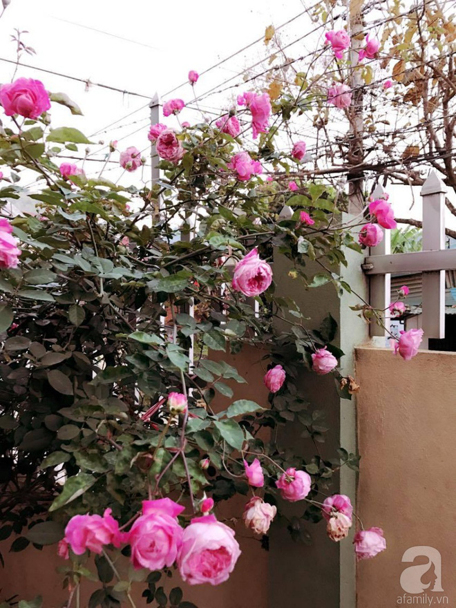 Ngôi nhà yên bình rợp bóng hồng cổ Sapa trên phố núi Tây Bắc của mẹ hai con xinh đẹp - Ảnh 10.