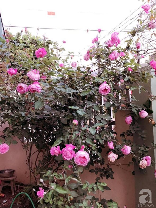 Ngôi nhà yên bình rợp bóng hồng cổ Sapa trên phố núi Tây Bắc của mẹ hai con xinh đẹp - Ảnh 11.