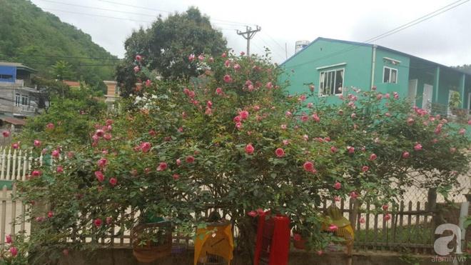 Ngôi nhà yên bình rợp bóng hồng cổ Sapa trên phố núi Tây Bắc của mẹ hai con xinh đẹp - Ảnh 13.