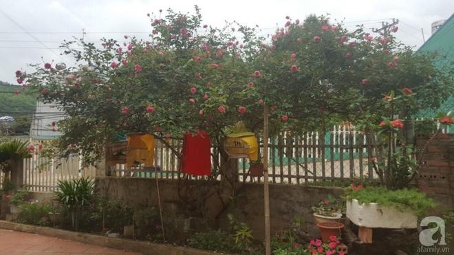 Ngôi nhà yên bình rợp bóng hồng cổ Sapa trên phố núi Tây Bắc của mẹ hai con xinh đẹp - Ảnh 14.