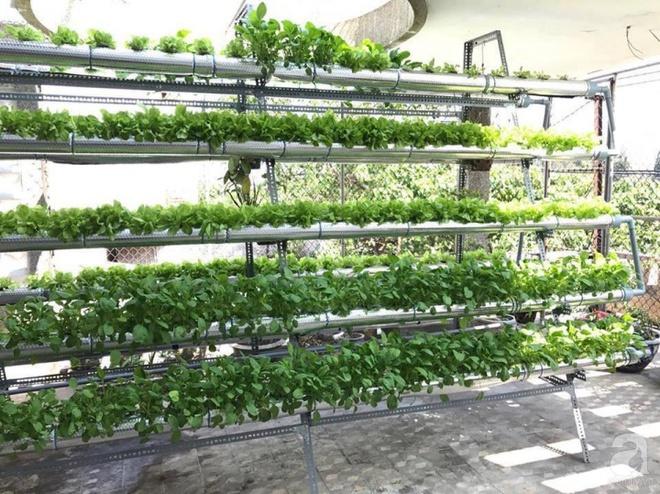 Vườn thủy canh bạt ngàn rau quả trên sân thượng thu hoạch đến gần 100kg mỗi vụ của chàng sinh viên kinh tế 9x - Ảnh 4.