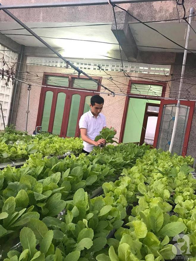 Vườn thủy canh bạt ngàn rau quả trên sân thượng thu hoạch đến gần 100kg mỗi vụ của chàng sinh viên kinh tế 9x - Ảnh 6.