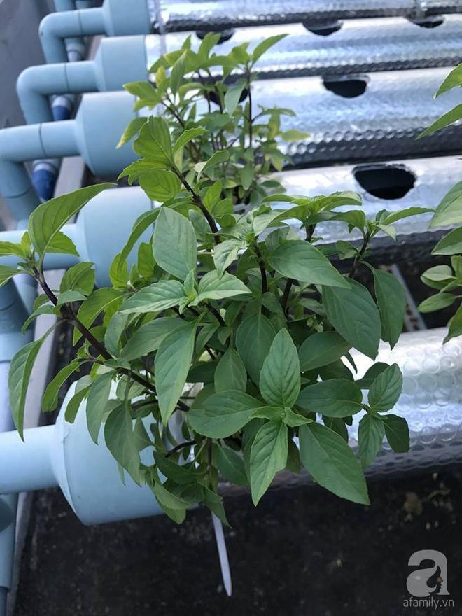 Vườn thủy canh bạt ngàn rau quả trên sân thượng thu hoạch đến gần 100kg mỗi vụ của chàng sinh viên kinh tế 9x - Ảnh 10.