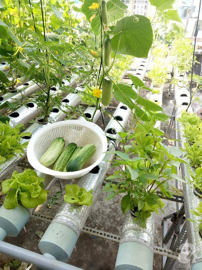 Vườn thủy canh bạt ngàn rau quả trên sân thượng thu hoạch đến gần 100kg mỗi vụ của chàng sinh viên kinh tế 9x - Ảnh 11.