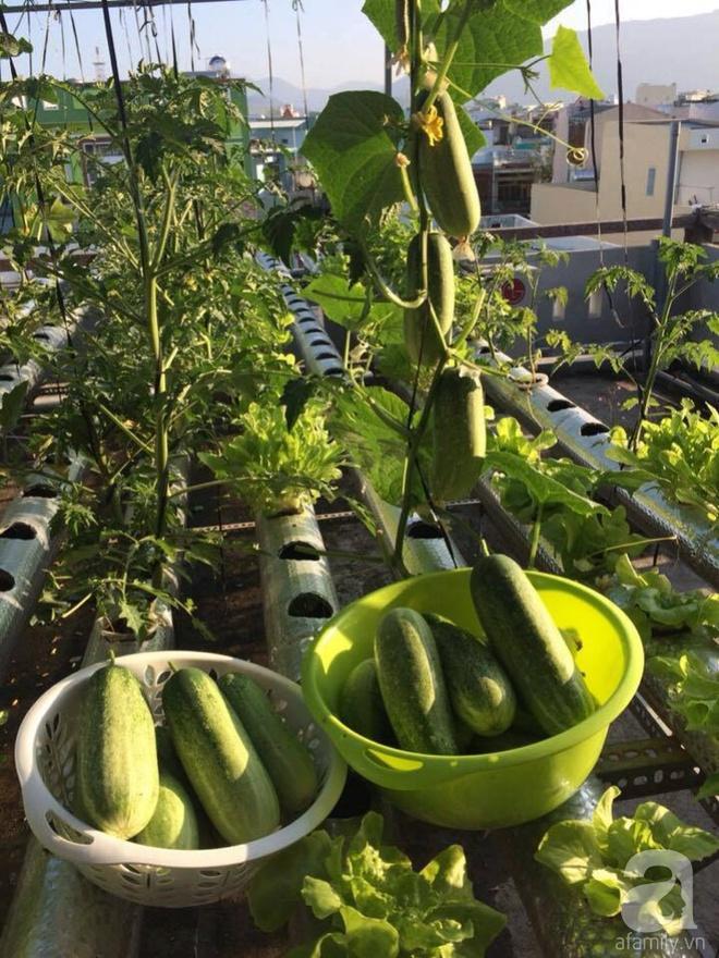 Vườn thủy canh bạt ngàn rau quả trên sân thượng thu hoạch đến gần 100kg mỗi vụ của chàng sinh viên kinh tế 9x - Ảnh 12.