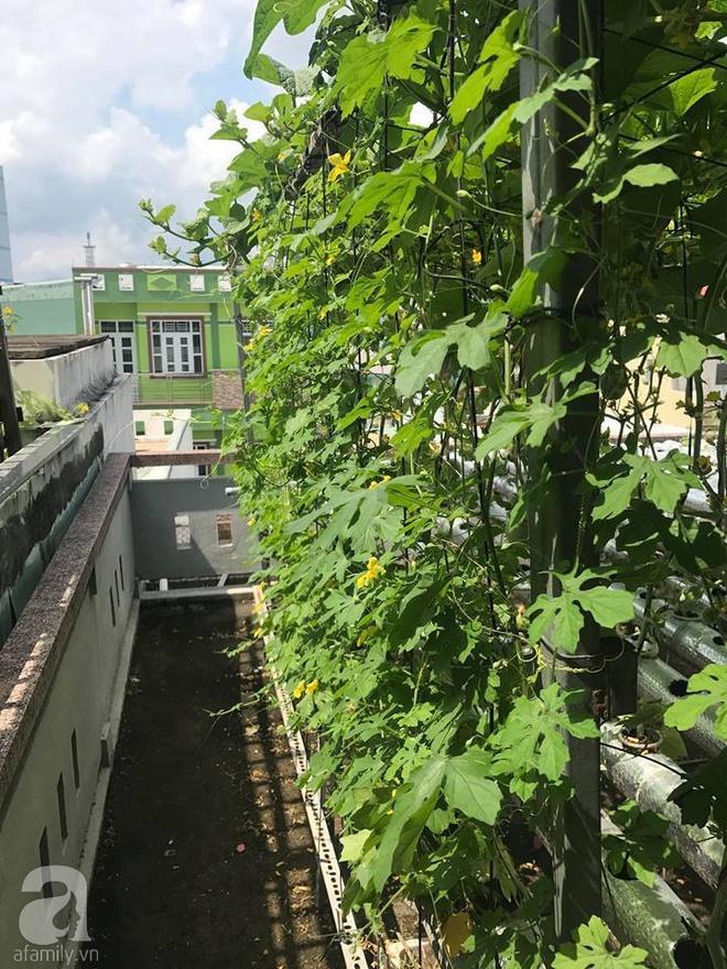 Vườn thủy canh bạt ngàn rau quả trên sân thượng thu hoạch đến gần 100kg mỗi vụ của chàng sinh viên kinh tế 9x - Ảnh 13.