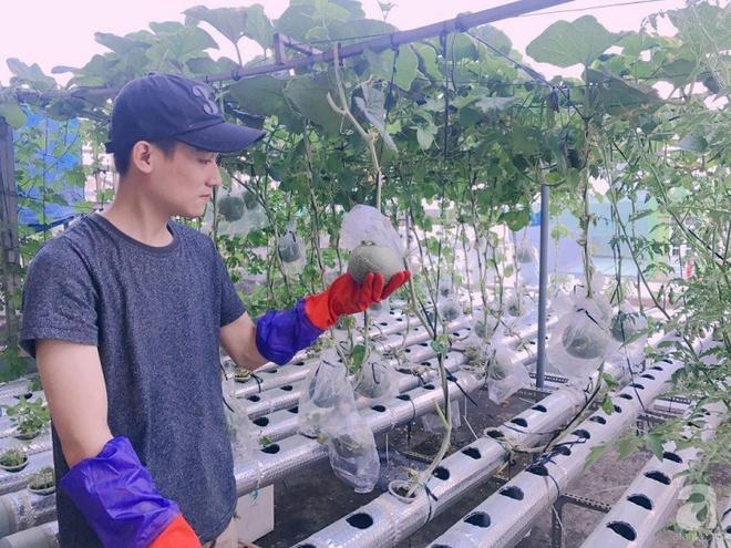 Vườn thủy canh bạt ngàn rau quả trên sân thượng thu hoạch đến gần 100kg mỗi vụ của chàng sinh viên kinh tế 9x - Ảnh 17.