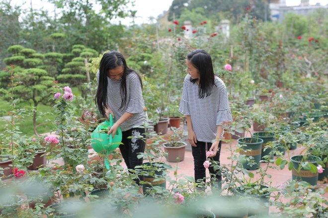 Ngôi nhà yên bình bên vườn hoa hồng với 3000 gốc hoa hồng ngoại của cô giáo ở Nam Định - Ảnh 4.