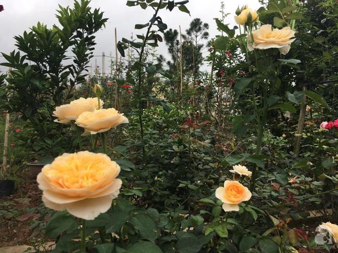 Ngôi nhà yên bình bên vườn hoa hồng với 3000 gốc hoa hồng ngoại của cô giáo ở Nam Định - Ảnh 15.