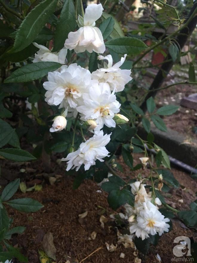 Ngôi nhà yên bình bên vườn hoa hồng với 3000 gốc hoa hồng ngoại của cô giáo ở Nam Định - Ảnh 23.