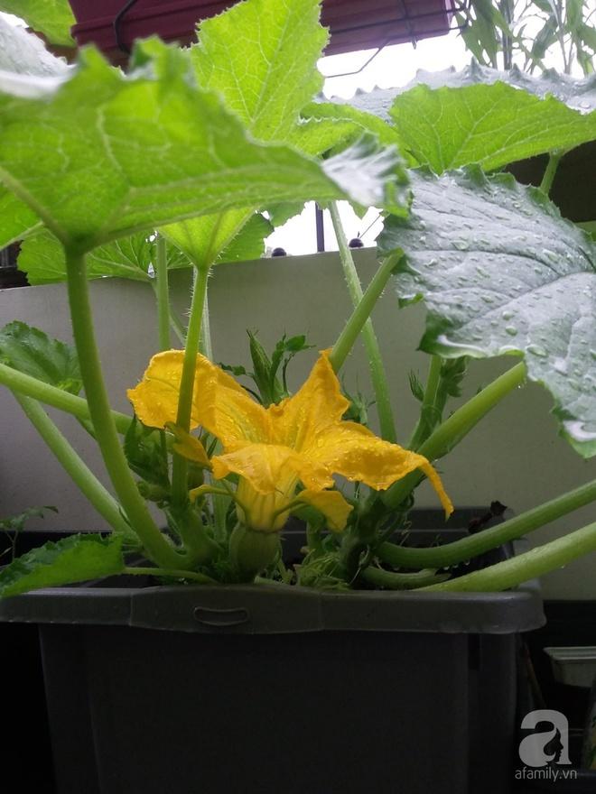 Ban công vỏn vẹn 6m² nhưng đẹp lung linh nhờ muôn sắc hoa do người vợ trẻ tự trồng - Ảnh 16.